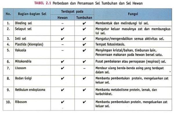 Perbedaan Sel Hewan Dengan Sel Tumbuhan dalam Tabel